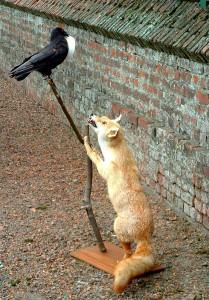 corbeau renard