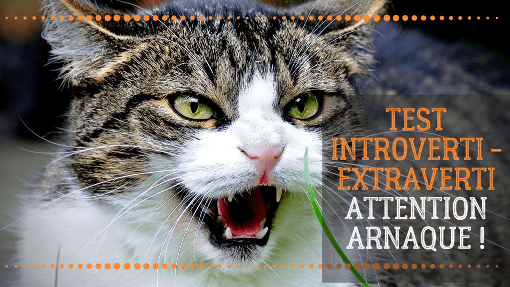 test introverti extraverti mbti intp